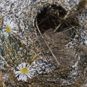 Susan Syddall.Nests.Images for Web
